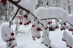 Seasons of the Sugar River - Winter