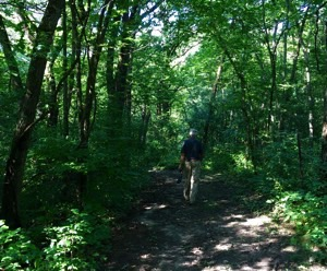 Walking a trail within Colored Sands State Forest